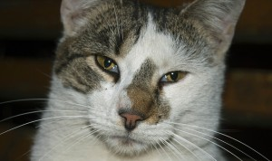 cat-830256_960_720
